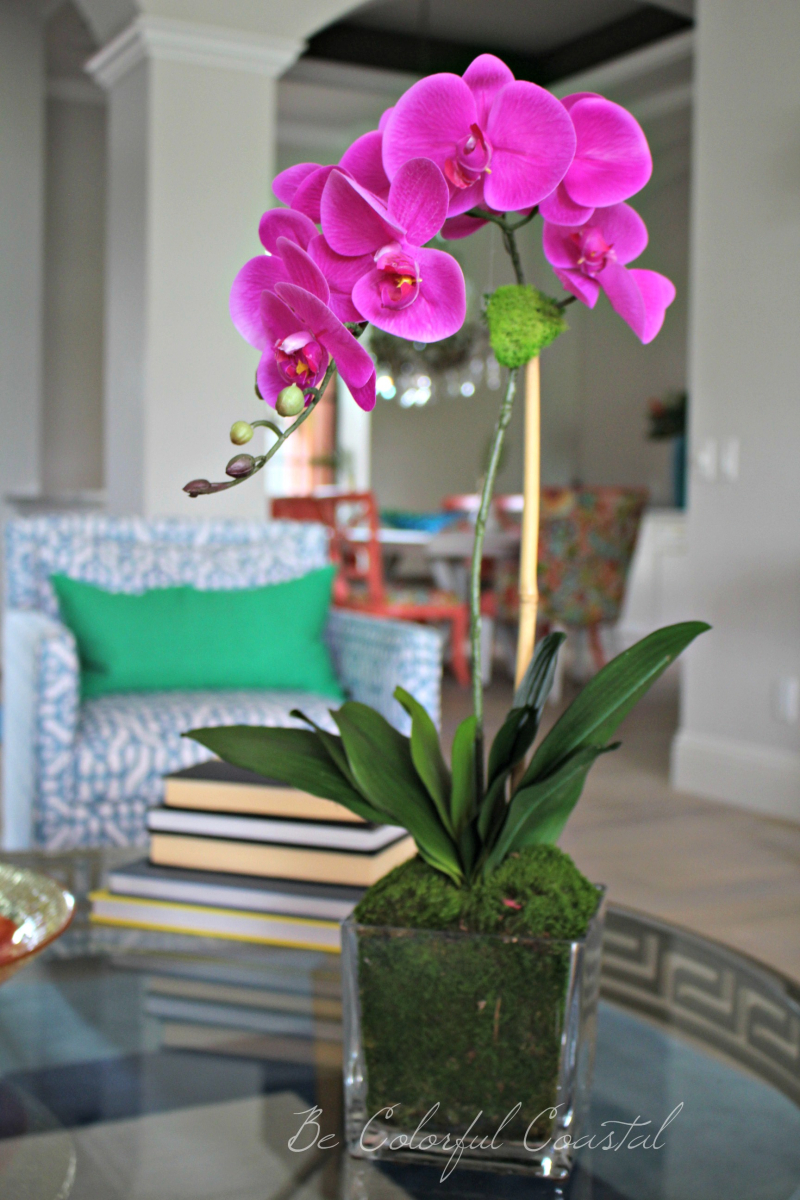 Living room orchid