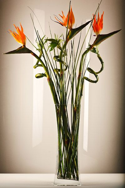 Bird of paradise in a clear vase